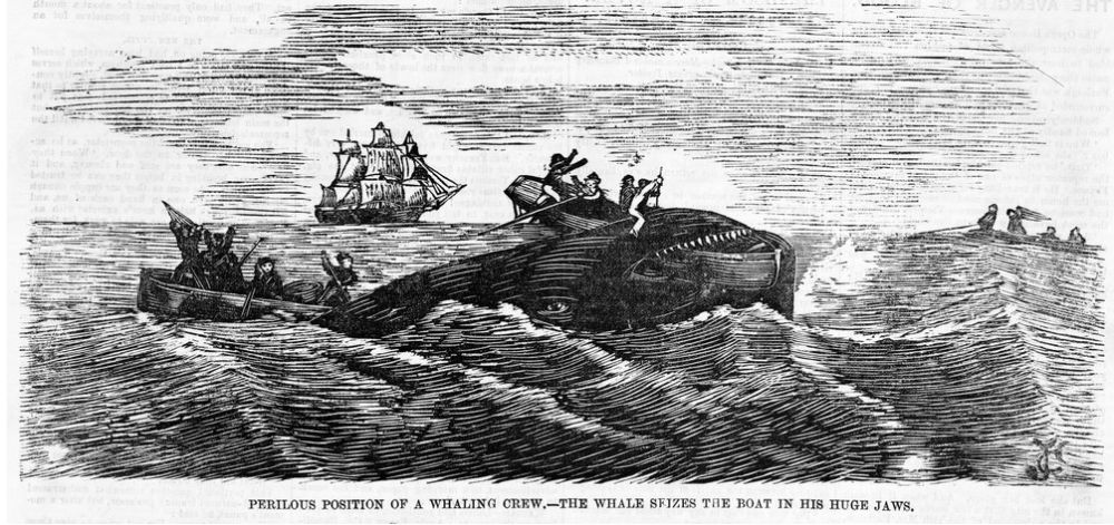 Engraving of whale seizing a whaling boat in his huge jaws.