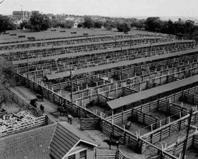 Newmarket-saleyards-1958
