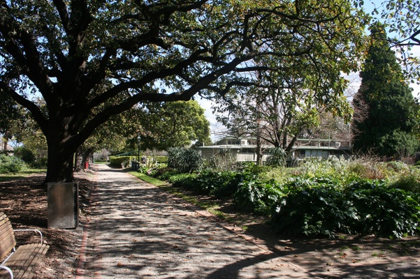 St_Vincent_Place_oaks